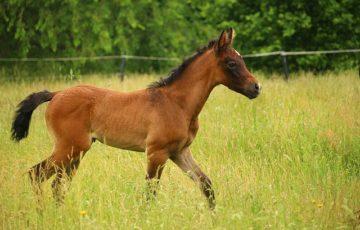 horse-1446690_640