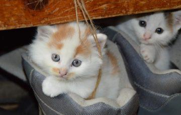 猫のお寺の知恩さんの感想
